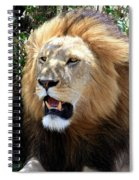 Lions Of The Masai Mara, Kenya Spiral Notebook