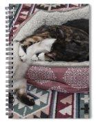 Liquid Cat Spiral Notebook