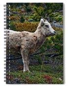 Litte Color Spiral Notebook