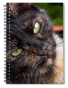 Little Alley Spiral Notebook