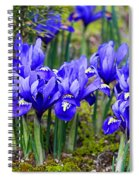 Little Baby Blue Irises Spiral Notebook