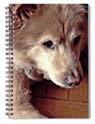 Little Bear In Old Age Spiral Notebook