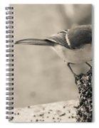 Little Bird Feeding Spiral Notebook