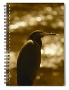 Little Blue Heron In Golden Light Spiral Notebook