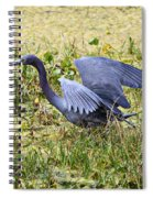 Little Blue Heron Walking In The Swamp Spiral Notebook