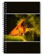 Little Brown Skipper Butterfly Spiral Notebook