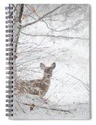 Little Doe In Snow Spiral Notebook