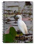 Little Egret 2 Spiral Notebook