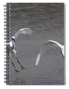 Little Egrets In Flight Spiral Notebook