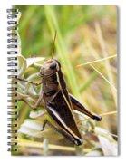 Little Grasshopper 2 Spiral Notebook