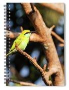 Little Green Bee Eater On A Branch Spiral Notebook