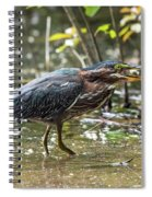 Little Green Heron With Fish Spiral Notebook