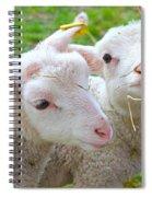Little Lambs Eat Straw Not Ivy Spiral Notebook