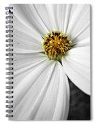 Little Miss Yellow Spiral Notebook