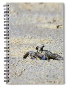 Little Nag's Head Crab Spiral Notebook