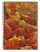 Little Pine Trees Growing On The Valley Cliffs Spiral Notebook