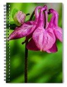 Little Pink Lamp Spiral Notebook