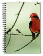 Little Red Beauty - Vermilion Flycatcher Spiral Notebook