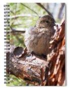Little Shy Spiral Notebook