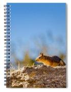 Little Squirrel Spiral Notebook