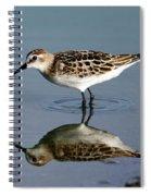 Little Stint  Spiral Notebook
