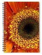 Little Sun Spiral Notebook
