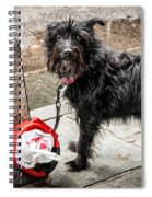Little Wet Puppy In French Quarter Spiral Notebook