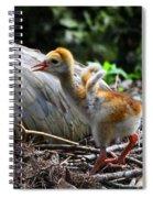 Little Wings Spiral Notebook