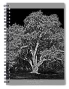 Live Oak At Hogan's Hole- Lion's Golf Course Spiral Notebook