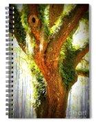Live Oak With Cypress Beyond Spiral Notebook