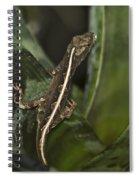 Lizard 2 Spiral Notebook