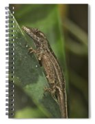 Lizard 3 Spiral Notebook