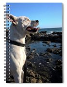 Lizzy's Sunset Spiral Notebook