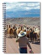 Llama Herd On Road Spiral Notebook