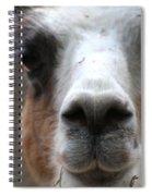 Llama Spiral Notebook