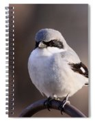 Loggerhead Shrike - Smokey Spiral Notebook