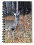 Lone Doe Spiral Notebook