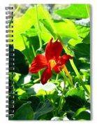 Lone Nasturtium   Spiral Notebook