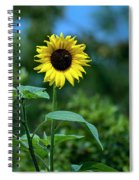 Lone Sunflower  Spiral Notebook