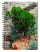Lone Tree On A Cliff Spiral Notebook