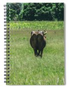 Lonely Cow 2 Spiral Notebook