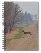 Lonely Deer Crossing Spiral Notebook