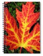 Lonely Leaf ... Spiral Notebook