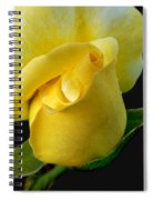 Lonely Teardrop Yellow Rose Bud Spiral Notebook