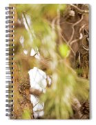 Long-eared Owl Asio Otus In A Tree Spiral Notebook