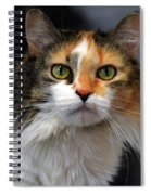 Long Haired Calico Cat Spiral Notebook
