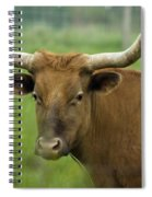 Long Horn Cow Spiral Notebook