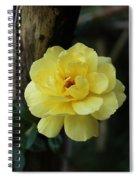 Single Yellow Rose  Spiral Notebook