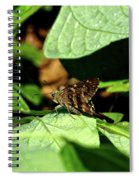 Long Tail Skipper Butterfly 1 Spiral Notebook