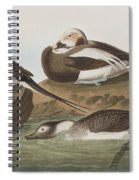 Long Tailed Duck Spiral Notebook